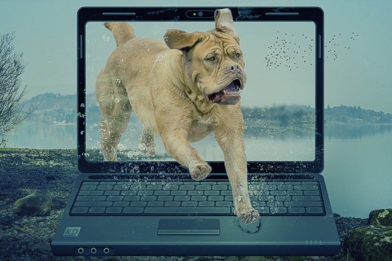 dog running out from a laptop